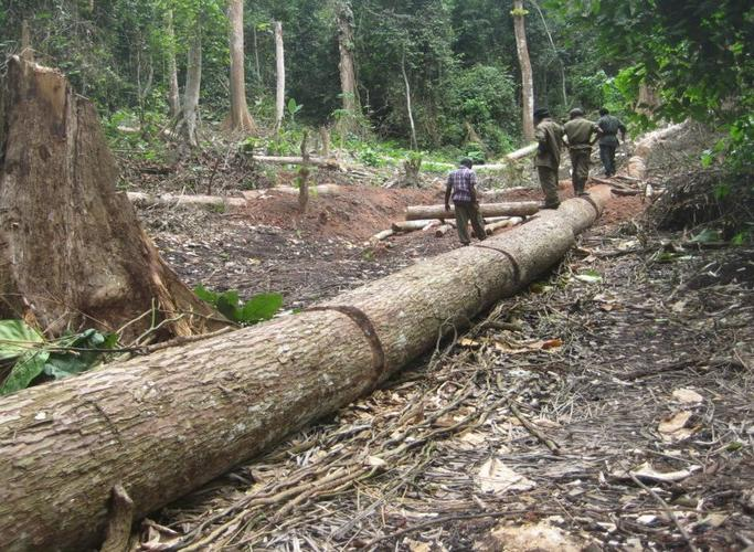 La déforestation menace la RDC - Photo: VivAfrik